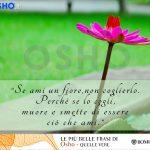 10 # Se ami un fiore